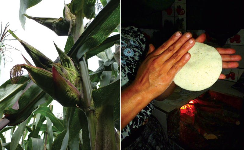 """""""For a season I followed Chema Gonzalez and his family through the life cycle of maize."""""""