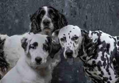 Pets Guatemala