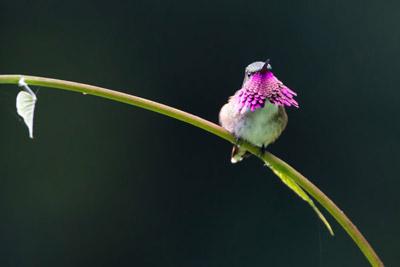 Guatemalan Highland Bird Species