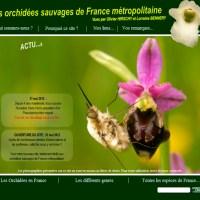 Les orchidées sauvages de France métropolitaine
