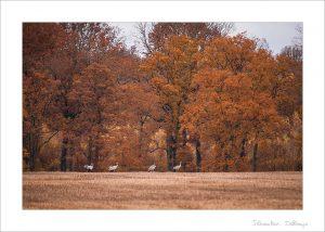 Preset - Couleurs d'automne (Fort)