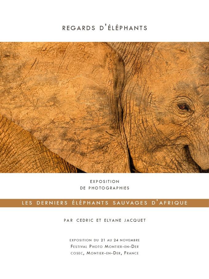 Regards d'éléphants