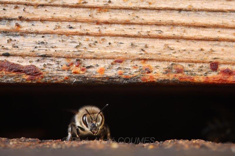 abeilles d automne01
