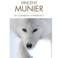 Exposition : Grands froids, de Vincent Munier