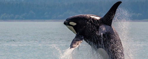 Rezgo is whale watching booking software