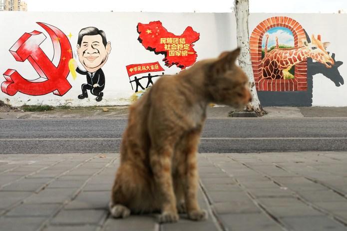 """流浪貓背後的""""社會穩定""""宣傳標語,諷刺點出被忽略的社會風暴。 (路透社)"""