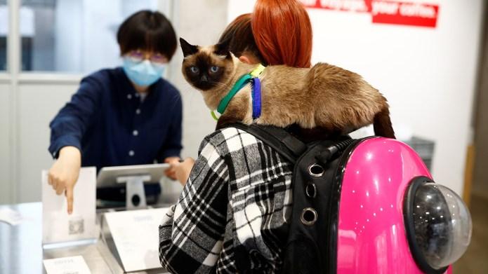 中國推行流浪貓絕育工作,卻出現絕育補貼被濫用、醫師專業未到位等問題。 (路透社)