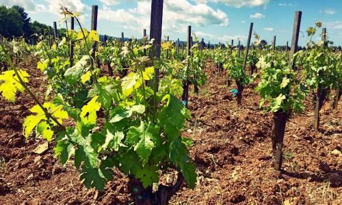 RFID & NFC per la tracciabilità del vino Collemassari