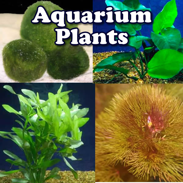 Aquarium Plant Packages