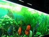 Discus Habitat for 50 - 60 Gallon Aquarium