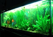 South American Habit for 100 Gallon Aquarium