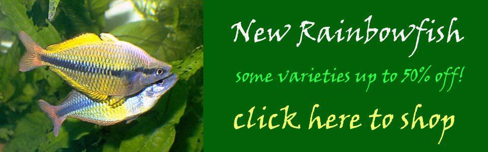 new-rainbowfish