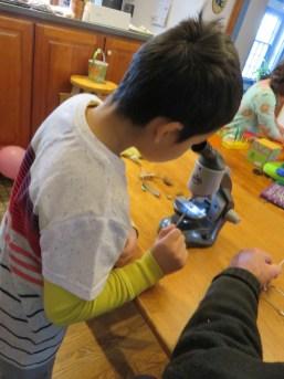 新しい顕微鏡に夢中で、「ビートルを今見てるんだ〜」という息子。よく見たらビートルじゃなくて、小ぶりのゴキでした。相変わらずたくましい子です。