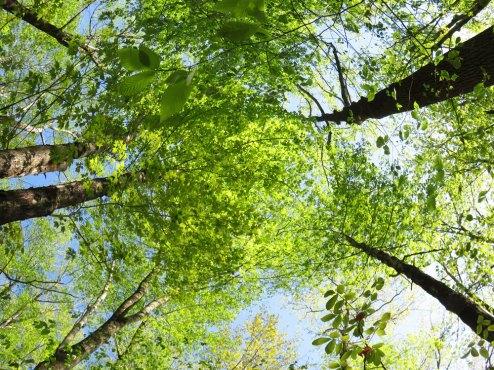 我が家の雑木林の新緑が美し過ぎて涙出そう(笑)これもフィッシュアイレンズで撮影。