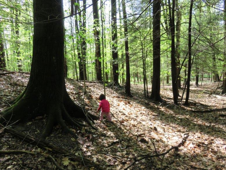 娘と我が家の裏にある雑木林を散歩しました。散歩好きで泥だらけになるのが大好きな娘。