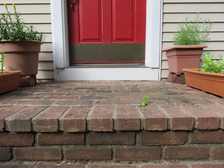 正面玄関のレンガ作りの階段にレタスが!