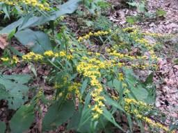 これも同じく今満開の野草のお花。なんだろう?
