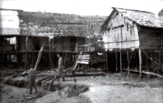 This is how a typical Bornean longhouse in the old days. Domesticated animal such as pig often left free-ranging under the longhouse. Not the actual picture.
