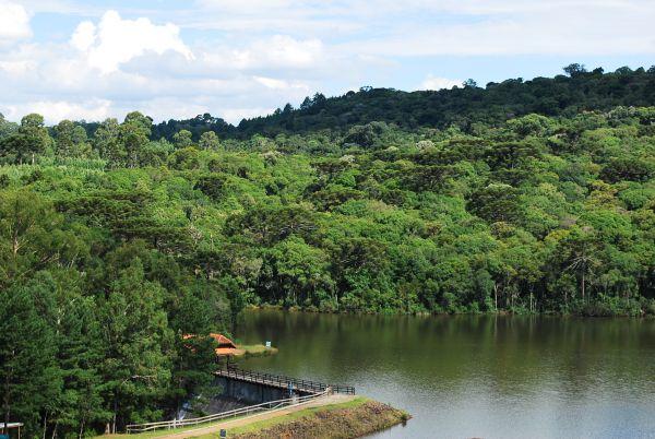 parque-dos-pinheiros-gramado