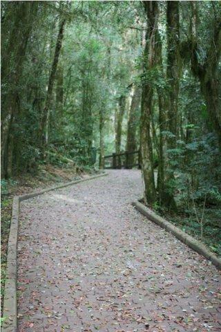 pinheirogrosso005