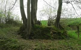 PM_Bäume im Winter
