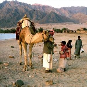 The Basque-Sumerian-Rh Negative Connection Sinai-bedouin