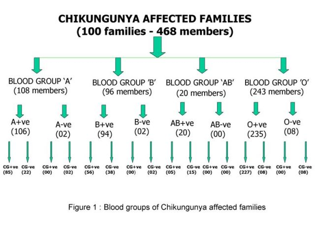 Rh Negative Immunity: What's The Deal? Chikungunya-by-blood-groups