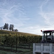 Tractor and Vineyard