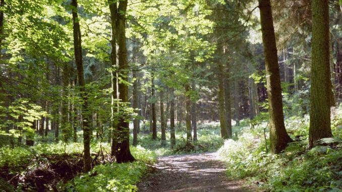Loop hiking trail