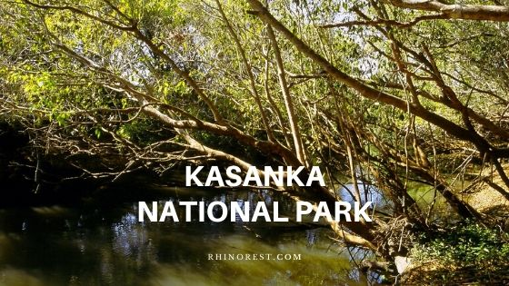 6 Reasons One Should Travel Kasanka National Park