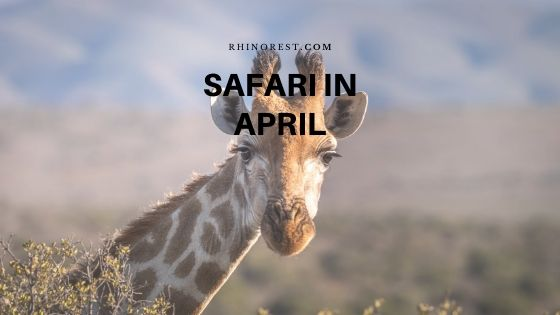 What to Consider for Safari in April?