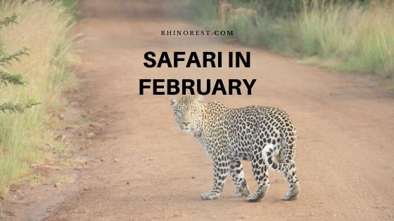 Why Should You Go for A Safari in February?