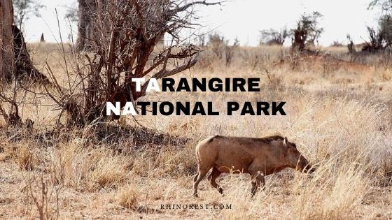 Tarangire National Park Tanzania – Safari | Animals | Weather