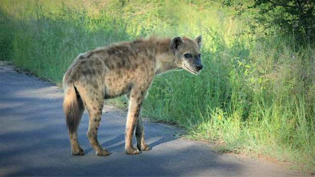 Ugly Animals in Africa