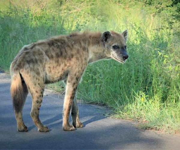 5 Ugly Animals in Africa Are Actually Beautiful When
