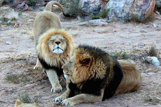 big five animals facts the big five facts facts about the big 5 facts about the big five africa safari animals african big 5 african big five wildlife safari africa big 5 south africa big five south africa big 5 animals in africa big five animals africa african plains game africa wildlife safari elephant safari africa africa safari big 5 africa big game animals big five kenya big 5 kenya big 5 animals in south africa big five animals in kenya the big 5 animals in africa lion and safari park johannesburg big five animals in south africa africas big five kenya safari animals best time to visit africa for wildlife big five cape town big 5 safari south africa lion safari park johannesburg the big five animals in south africa the big five animals in africa african plains game list big 5 safari animals south africa big five tanzania big five animals in tanzania lion and safari park south africa south africa wildlife safari big 5 african game animals botswana elephant safari the big 5 animals in south africa african plains game animals big 5 safari kenya big five african game animals best wildlife in africa lion safari park south africa wildlife safari south africa south african game animals big five safari south africa namibia wildlife safari big five safari kenya south africa animal safari african big cats safaris lion & safari park johannesburg sa big 5 animals south africa safari animals popular animals in africa south africa wildlife tour packages wildebeest kenya lion safari johannesburg big cats in kenya giraffe safari africa african wildlife tours elephant safari south africa the big 5 safari south africa crater in africa with animals most popular animal in africa out of africa wild animal park the big five animals south africa addo elephant park big 5 animal park cape town the big five animals found in kenya best time to see animals in south africa the big 5 animals south africa south africa animal park lion safari south africa wildlife park south africa lion safa
