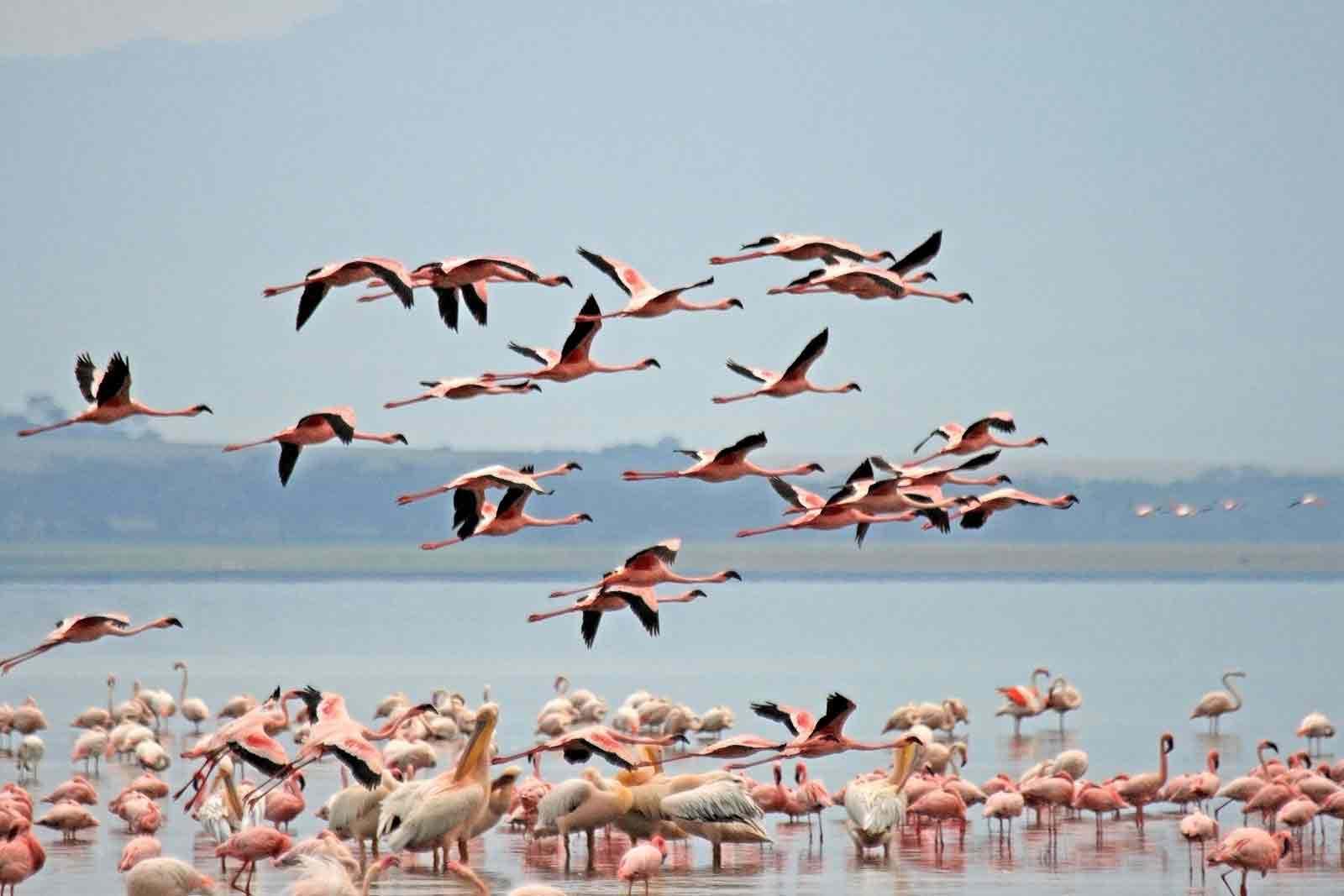 Lake Nakuru National Park Kenya – Wildlife | Biodiversity