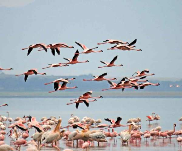 Lake Nakuru National Park Kenya – Wildlife | Biodiversity