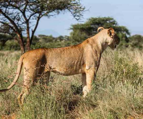 Tsavo National Park Kenya – Biodiversity | Conservation