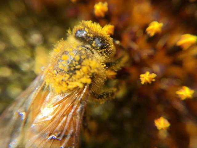 information about honey bee in english