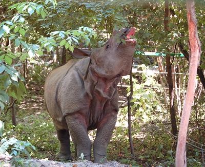 Nepal, im Juli 2006 (Foto: Sóstó Zoo)