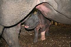 Puranas Baby