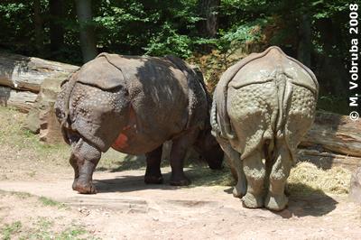 Purana (li) und Ropen (re), 26. Juli 2008