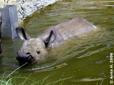 Sundari liebte schon damals den Pool, 15. Juli 2006