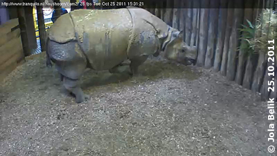 Saar in ihrem Stall, 25. Oktober 2011 (Screenshot von Webcam)