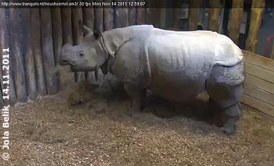 Sarr im Stall, jetzt wird es sicher nicht mehr allzu lange dauern, bis ist Baby da ist! 14. November 2011 (Screenshot von Webcam)