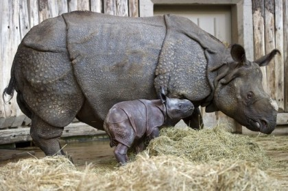 Jhansi mit Baby, 19. Jänner 2010 (Foto: Foto: dpa - Bildfunk)