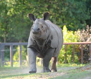 Shikari, 17. September 2009