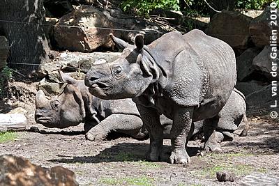 Fanindra (liegend) und Namaste (stehend), 29. Juli 2010