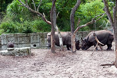 Und weiter geht die Rangelei ... (Foto: Zoo Basel)